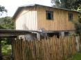 a casa sem tinta, e minha cerca incompleta de bambu