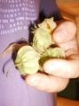 frutinhas azedas que esqueci o nome