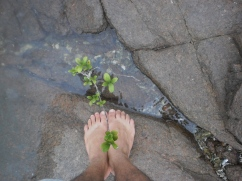 a planta do pé